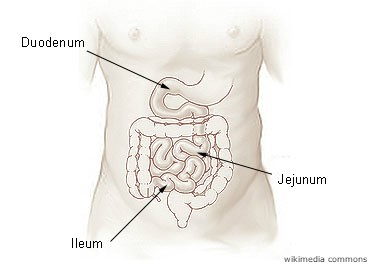 map-of-intestines