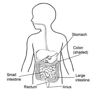 Body chart with stomach, colon, anus, rectum and small and large intestines